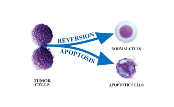 Tumor Reversion - SBG Lab